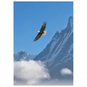 Natures Flight Singles