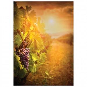 Vineyard Singles