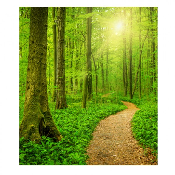Perforated Bookmarks - Sunny Forest Path | Thermalgraphics